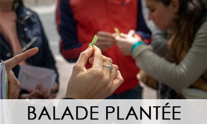 Balade Plantée 2019-2020